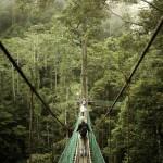 Rainforest Canopy Passarela, Bornéu