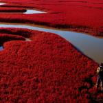 Praia Vermelha Simplesmente Praia Vermelha