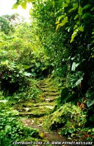 saba-pathway