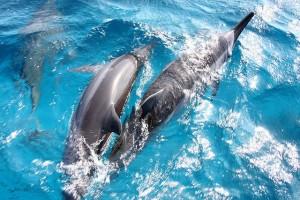 Fernando de Noronha golfinhos.jpg