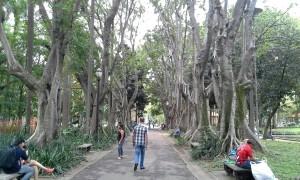 Parque Jardim da Luz joia da cidade.jpg